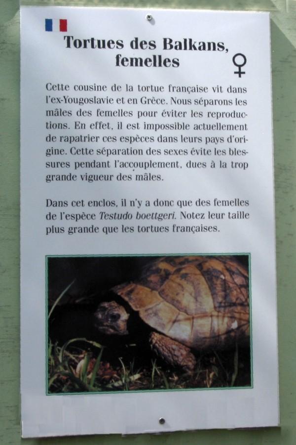 Pour les amoureux des tortues Hermann : stage au village des tortues de Gonfaron (Sud de la France) Fer_st61
