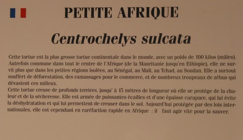 Pour les amoureux des tortues Hermann : stage au village des tortues de Gonfaron (Sud de la France) Fer_st63