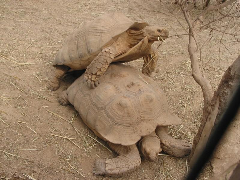 Pour les amoureux des tortues Hermann : stage au village des tortues de Gonfaron (Sud de la France) Fer_st65
