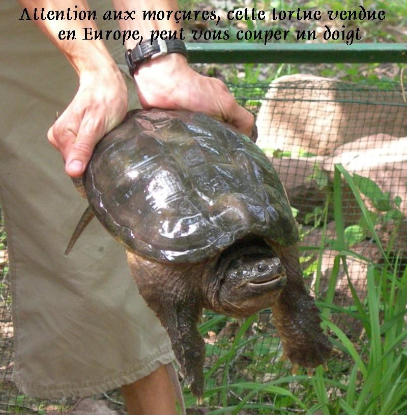 Pour les amoureux des tortues Hermann : stage au village des tortues de Gonfaron (Sud de la France) Fer_st68