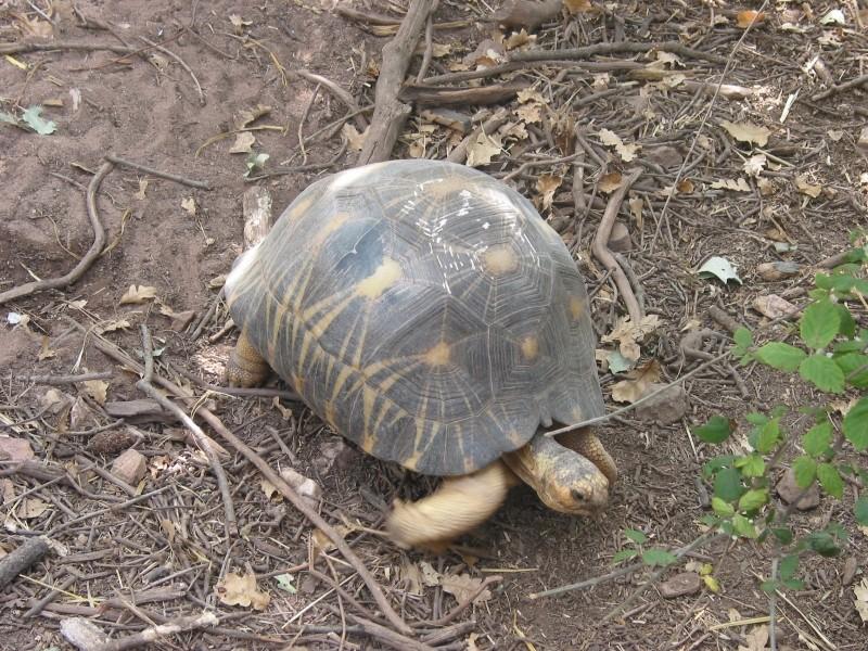 Pour les amoureux des tortues Hermann : stage au village des tortues de Gonfaron (Sud de la France) Fer_st70
