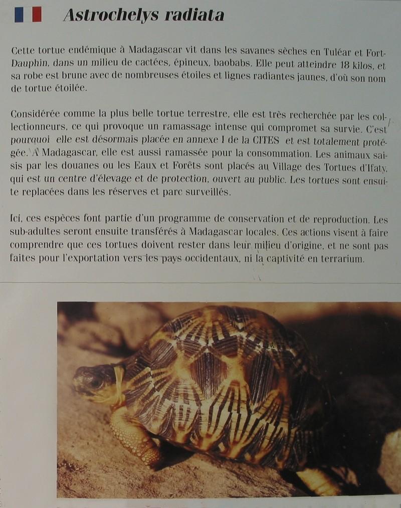 Pour les amoureux des tortues Hermann : stage au village des tortues de Gonfaron (Sud de la France) Fer_st71