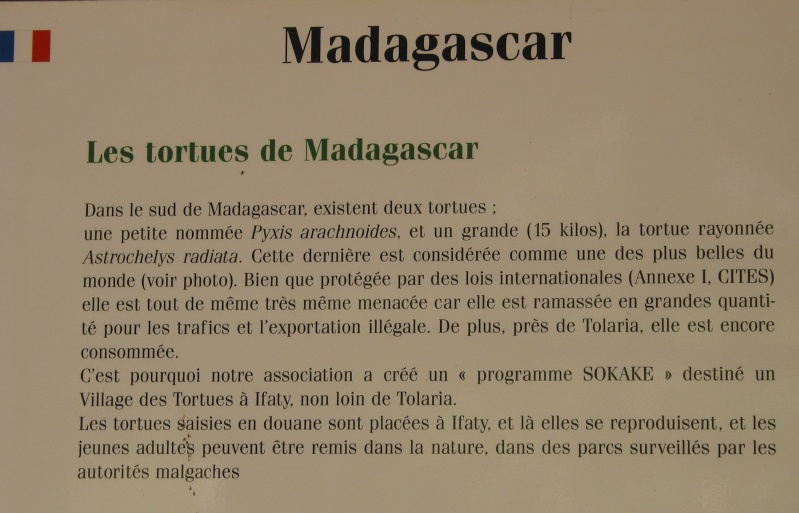 Pour les amoureux des tortues Hermann : stage au village des tortues de Gonfaron (Sud de la France) Fer_st73