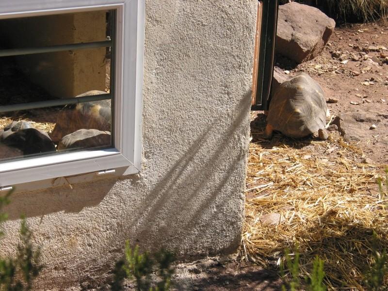 Pour les amoureux des tortues Hermann : stage au village des tortues de Gonfaron (Sud de la France) Fer_st74