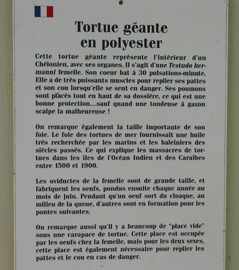 Pour les amoureux des tortues Hermann : stage au village des tortues de Gonfaron (Sud de la France) Fer_st79
