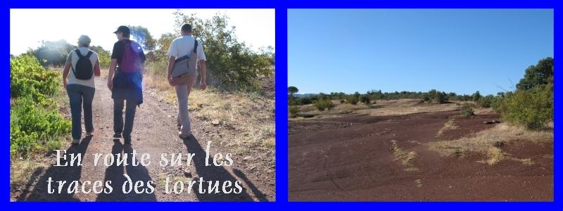 Pour les amoureux des tortues Hermann : stage au village des tortues de Gonfaron (Sud de la France) Fer_st81