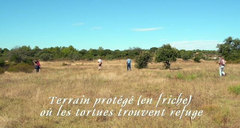 Pour les amoureux des tortues Hermann : stage au village des tortues de Gonfaron (Sud de la France) Fer_st82