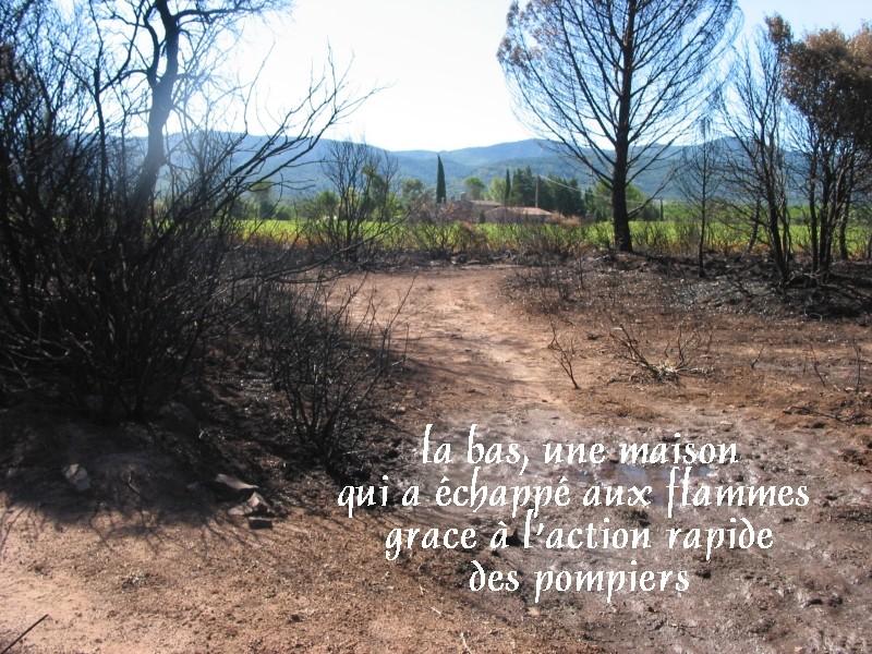 Pour les amoureux des tortues Hermann : stage au village des tortues de Gonfaron (Sud de la France) Fer_st87