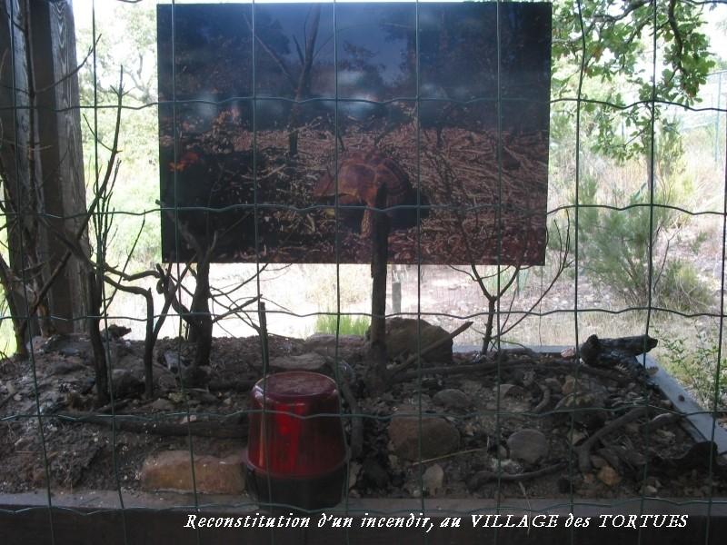 Pour les amoureux des tortues Hermann : stage au village des tortues de Gonfaron (Sud de la France) Fer_st90