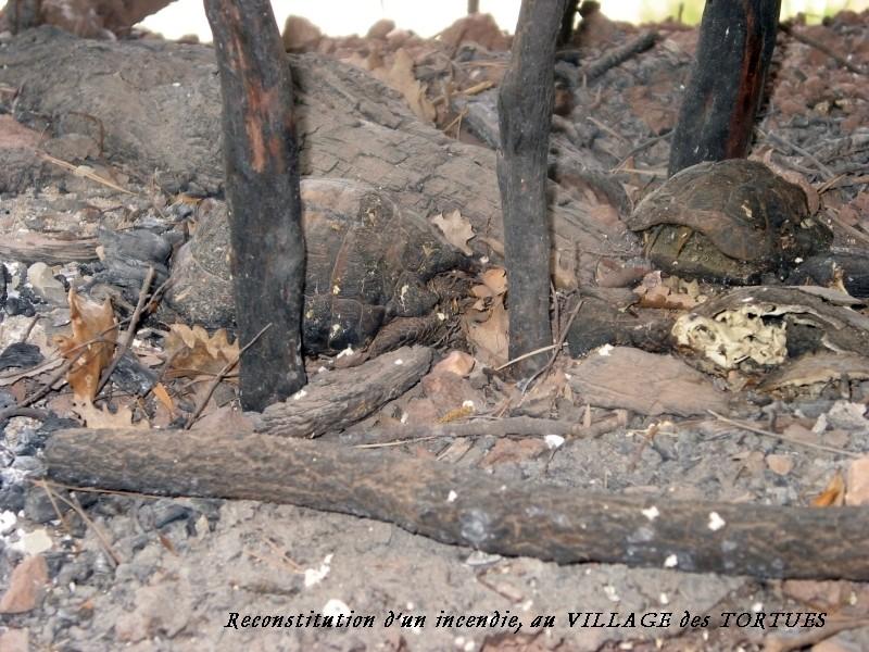 Pour les amoureux des tortues Hermann : stage au village des tortues de Gonfaron (Sud de la France) Fer_st91