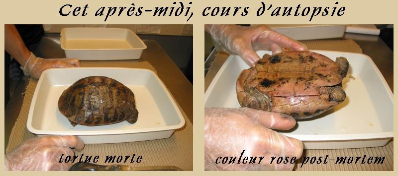 Pour les amoureux des tortues Hermann : stage au village des tortues de Gonfaron (Sud de la France) Fer_st93