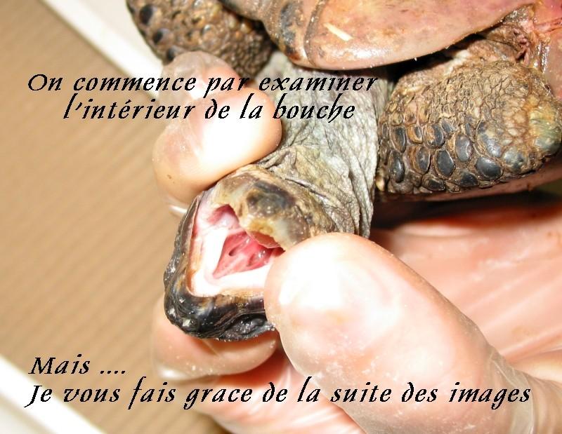Pour les amoureux des tortues Hermann : stage au village des tortues de Gonfaron (Sud de la France) Fer_st94