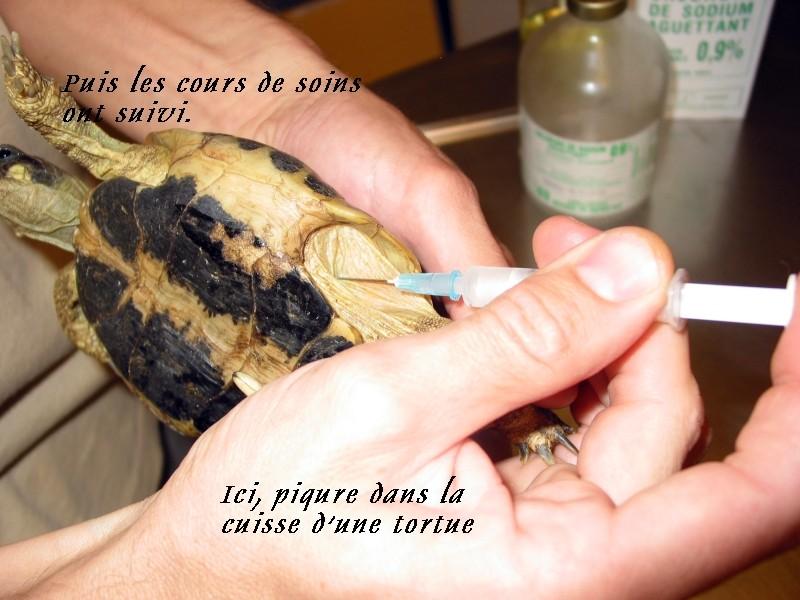 Pour les amoureux des tortues Hermann : stage au village des tortues de Gonfaron (Sud de la France) Fer_st95