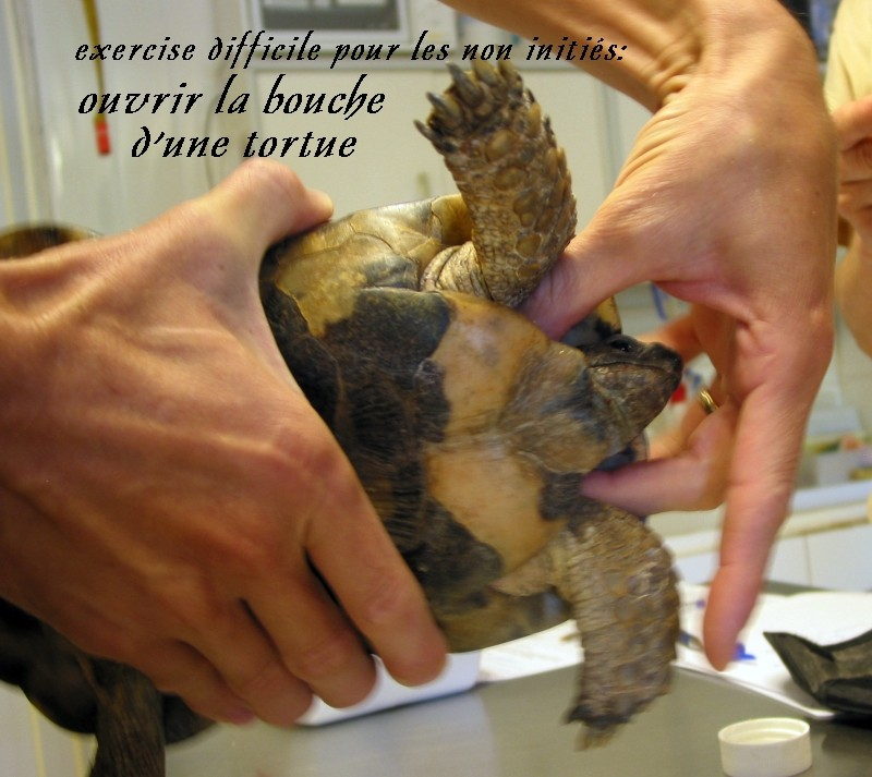 Pour les amoureux des tortues Hermann : stage au village des tortues de Gonfaron (Sud de la France) Fer_st96