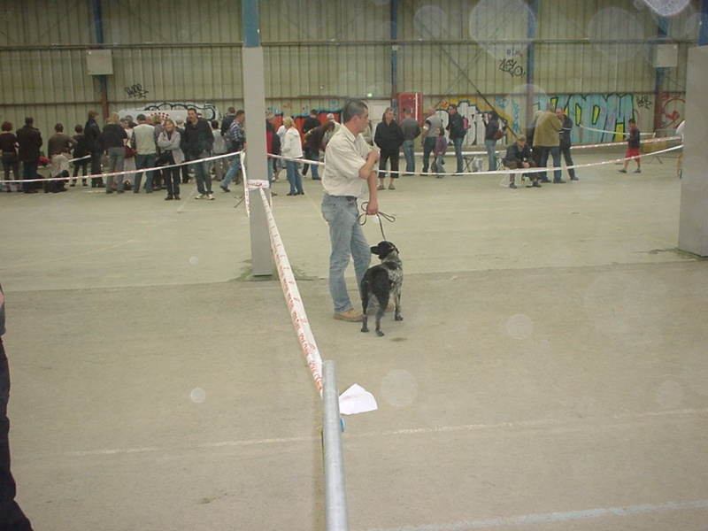 exposition canine  02010