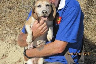 SPEEDY, beagle femelle, 9 ans (11) Image_12