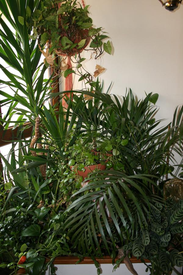 l'homme qui parle aux plantes Jardin10