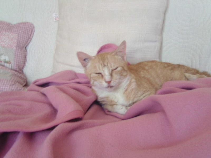 Caline,  née le 1/01/1996, identifiée HPB743 26_fev12