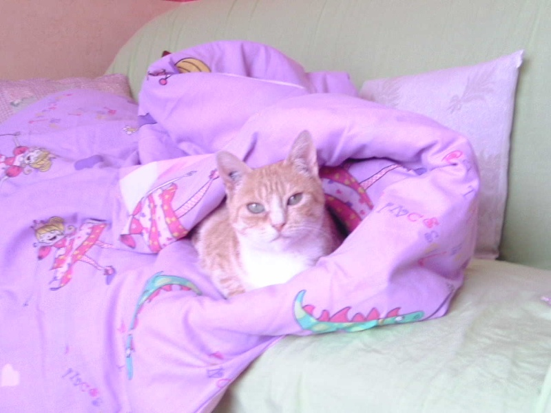Caline,  née le 1/01/1996, identifiée HPB743 Bild1210