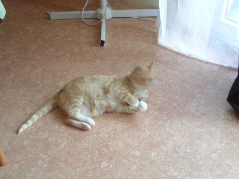 Caline,  née le 1/01/1996, identifiée HPB743 Bonheu11