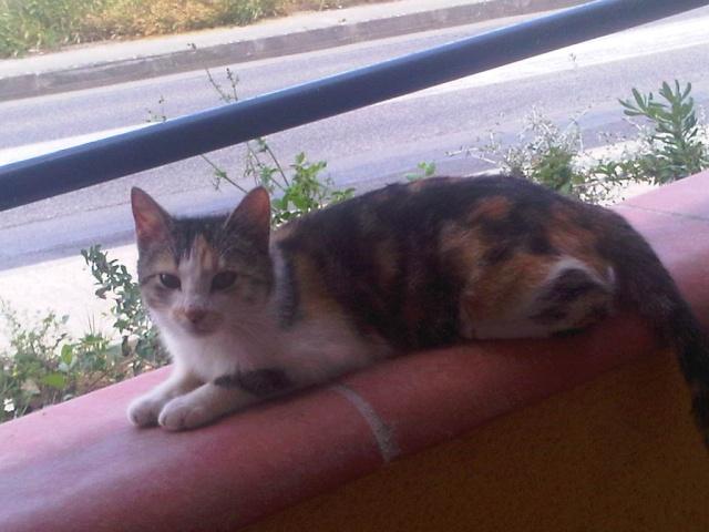 Photos chatons sur mon balcon - Page 2 Img00010