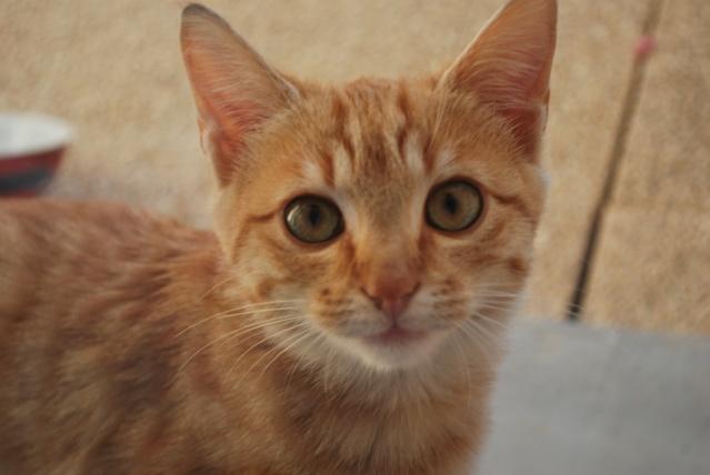 Photos chatons sur mon balcon Photo102