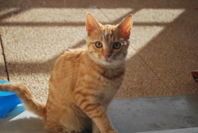 Photos chatons sur mon balcon Photo107