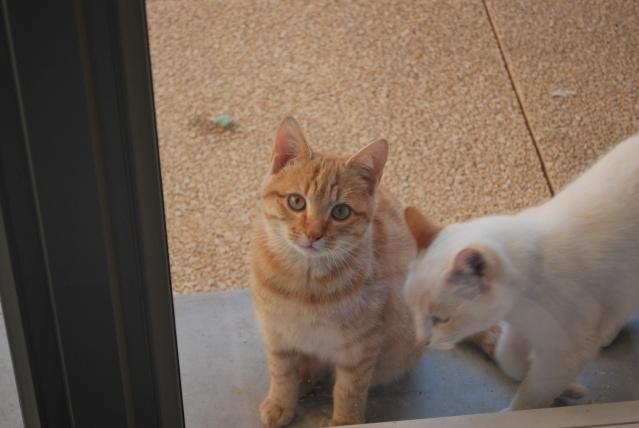 Photos chatons sur mon balcon - Page 2 Photo164
