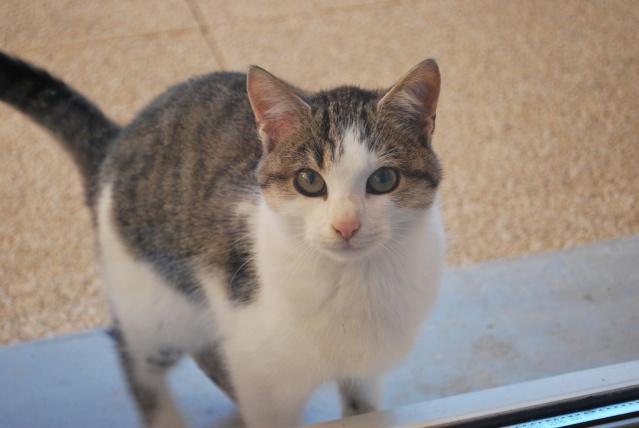 Photos chatons sur mon balcon - Page 2 Photo165