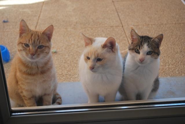 Photos chatons sur mon balcon - Page 2 Photo166