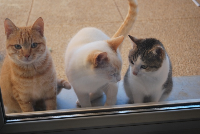 Photos chatons sur mon balcon - Page 2 Photo167