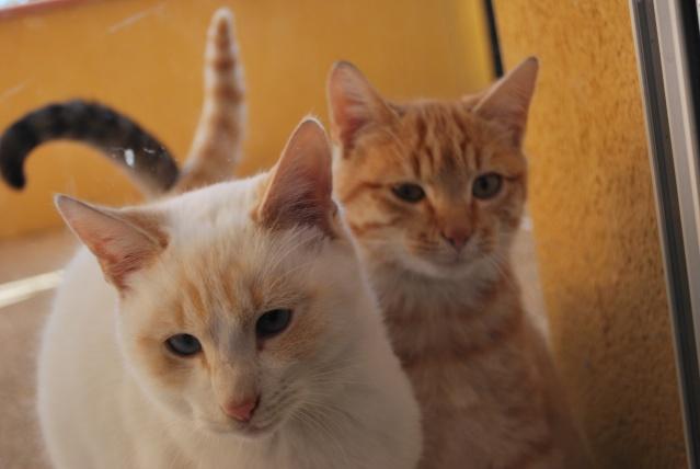 Photos chatons sur mon balcon - Page 2 Photo170