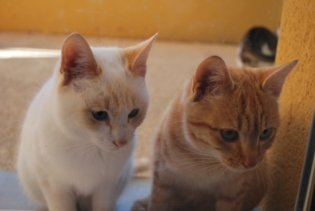 Photos chatons sur mon balcon - Page 2 Photo171