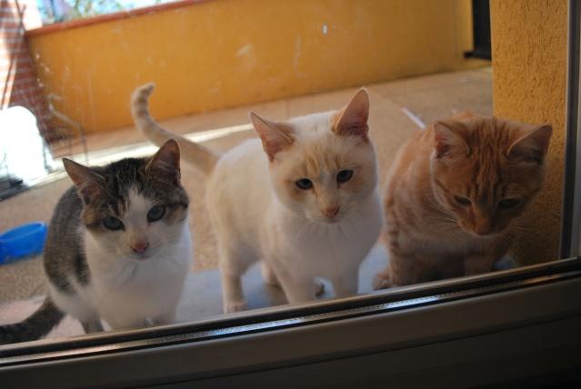 Photos chatons sur mon balcon - Page 2 Photo172