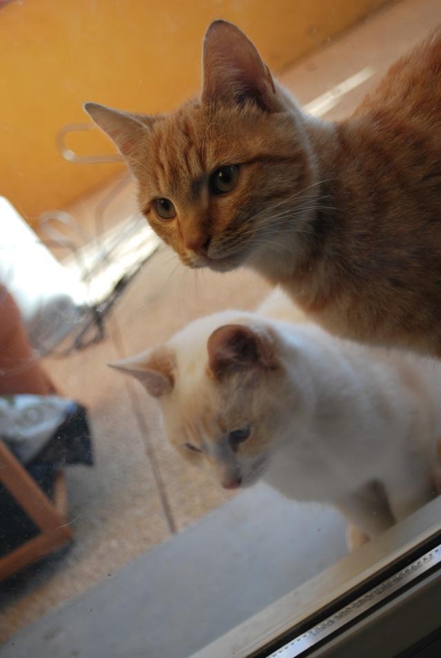 Photos chatons sur mon balcon - Page 2 Photo177