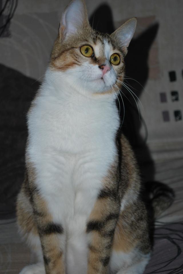 Souki - Page 8 Photo198