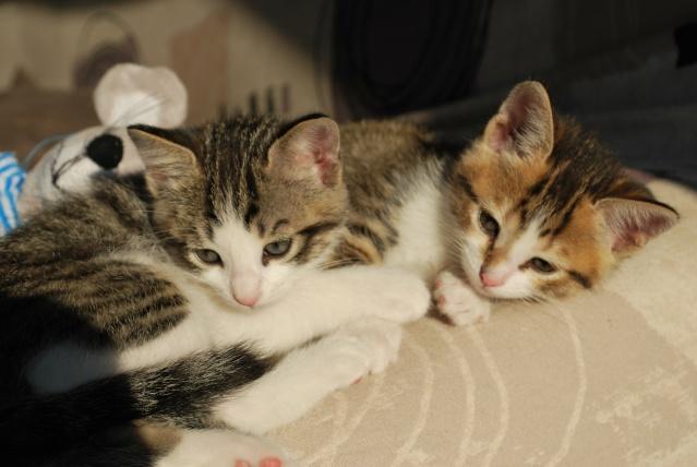 Souki et Eiko - Page 22 Photo202