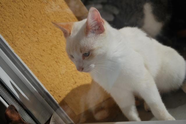 Photos chatons sur mon balcon Photo_99