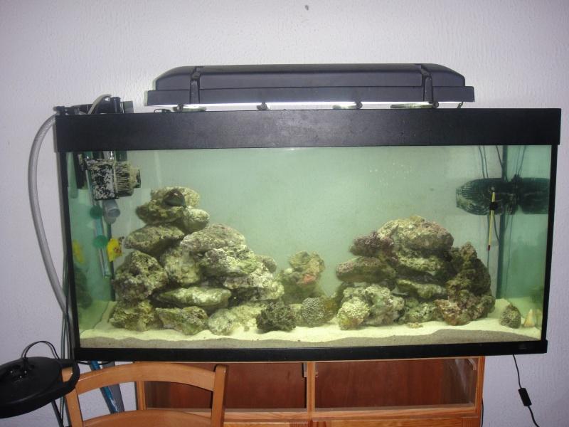 fabrication meuble aquarium siporex  Dsc01426