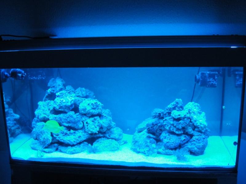 fabrication meuble aquarium siporex  Dsc01710
