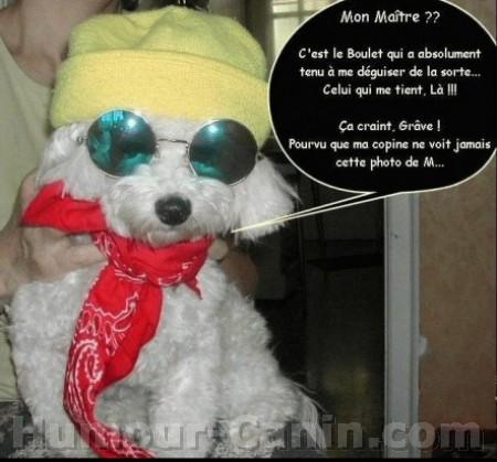 chiens comiques Big_2210
