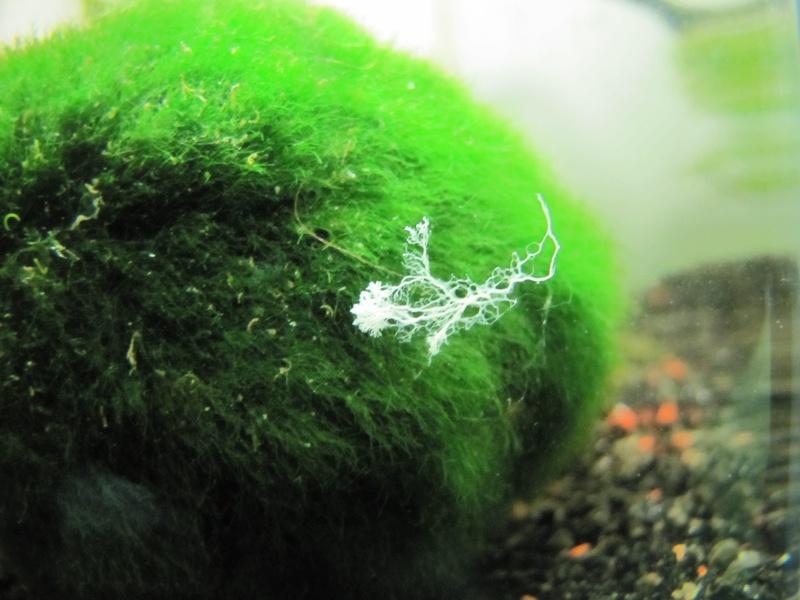 [Astuce] Contre les champignons type oodium Img_5417