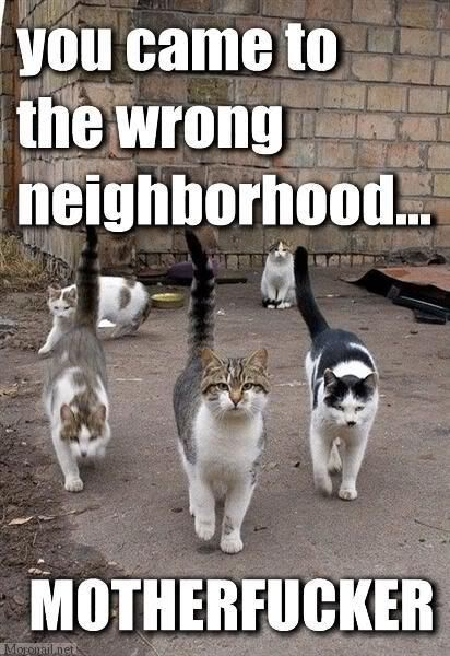 Funny pic thread - Page 3 Neighb10
