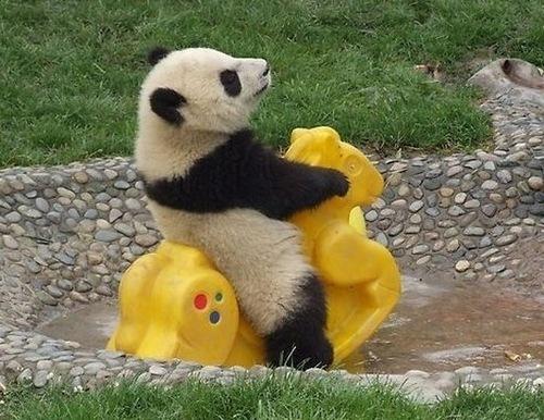 Funny pic thread - Page 2 Panda_10