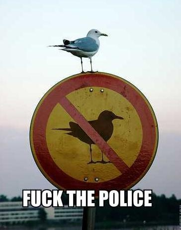 Funny pic thread - Page 3 Seagul10