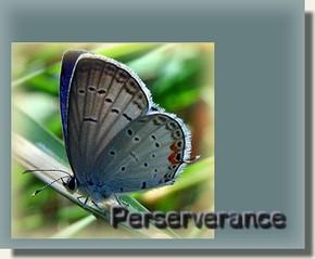 Perserverance Blue-b10