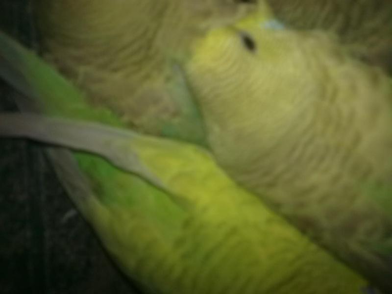 kiwi et vert  Photo_24