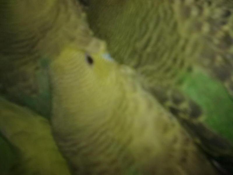kiwi et vert  Photo_26