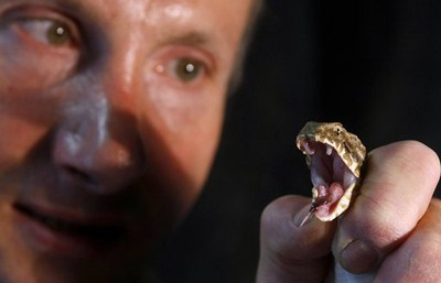 Les serpents les plus dangereux du monde 1310