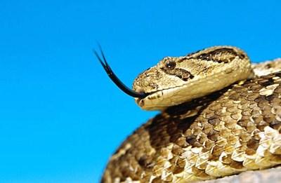 Les serpents les plus dangereux du monde 2010